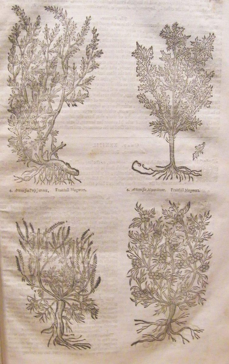 Theatrum Botanicum