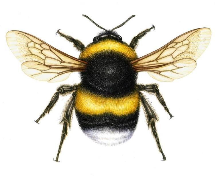 lizzieharper bee.jpg