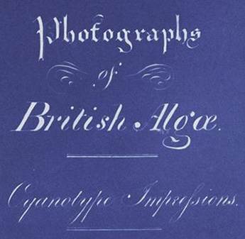 Anna_Atkins_Title_Page_of_Photographs_of_British_Algae_Cyanotype_Impressions_(Detail)